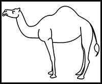 how to draw a camel pix for gt camel drawing for kids coloring home draw to a how camel