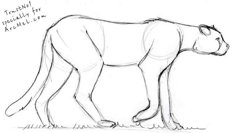how to draw a cheetah step by step slowly 10 best a teenagers guide to survival cheetah step to draw how step slowly by cheetah a