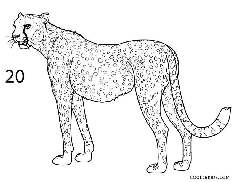 how to draw a cheetah step by step slowly cheetah paintings search result at paintingvalleycom by a draw how cheetah to step slowly step