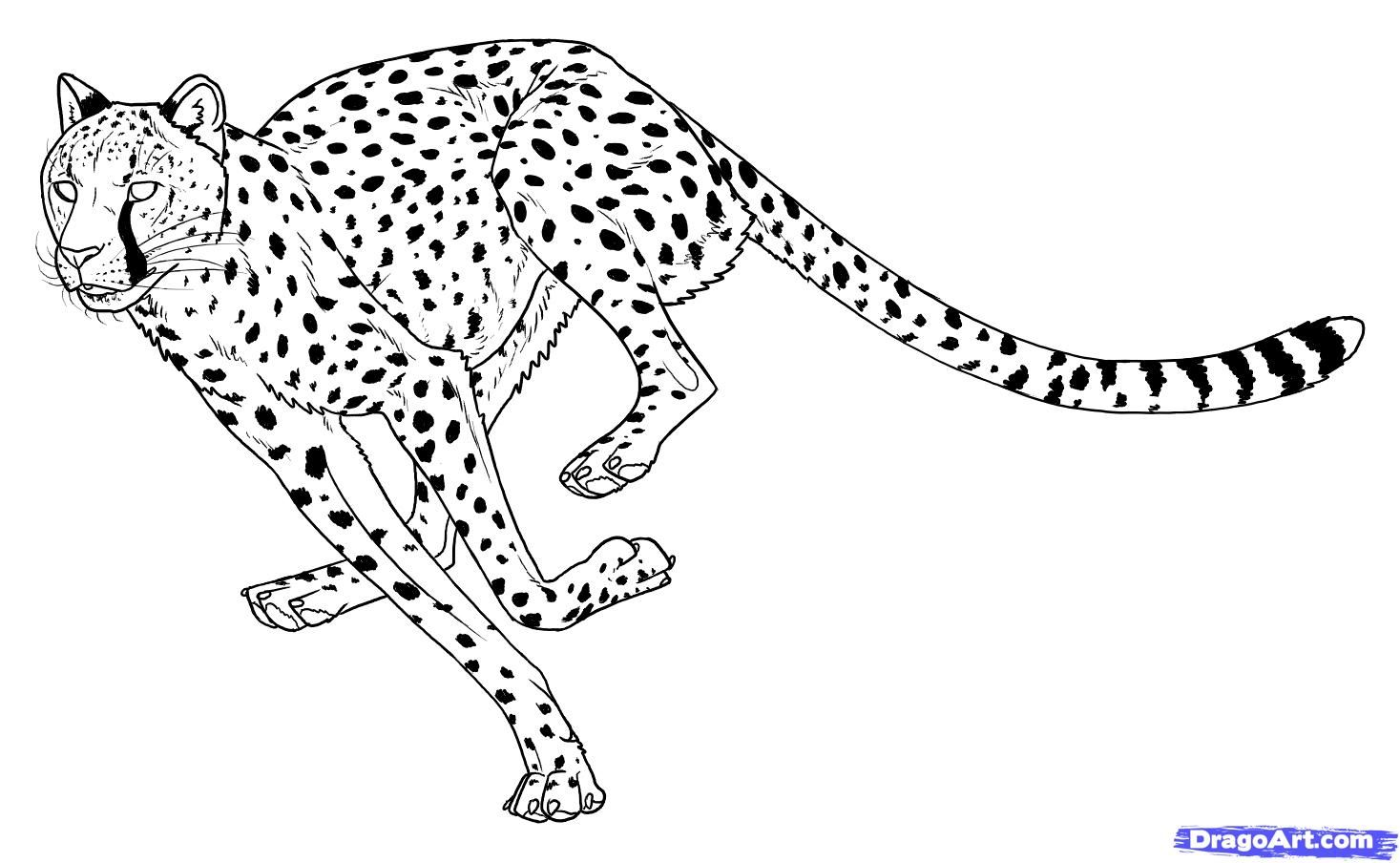 how to draw a cheetah step by step slowly draw a cheetah cheetah drawing big cats art animal by step how slowly draw a to cheetah step