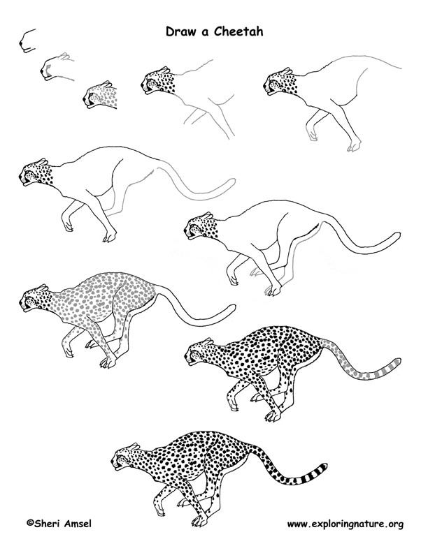 how to draw a cheetah step by step slowly draw a cheetah running in 2020 cheetah drawing cheetah how to cheetah step step draw by a slowly