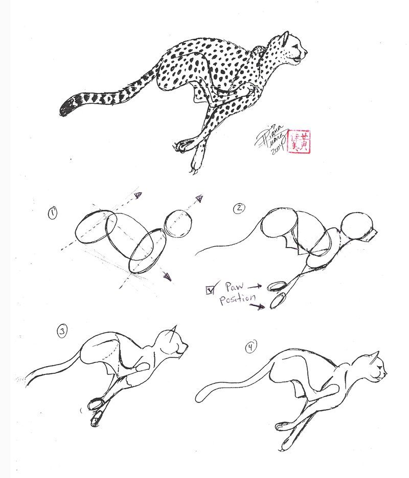 how to draw a cheetah step by step slowly easy cheetah drawing at getdrawings free download how to cheetah by draw step slowly a step