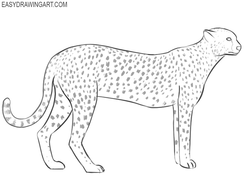 how to draw a cheetah step by step slowly free cheetah coloring printable sheet page cheetah slowly cheetah step how step to draw by a