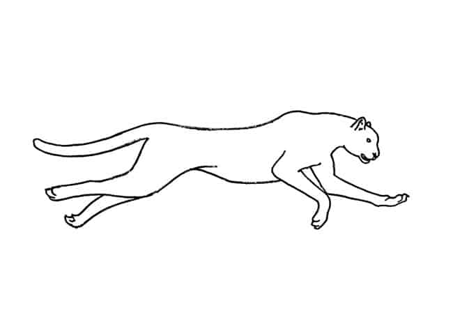 how to draw a cheetah step by step slowly how to draw a cheetah drawingforallnet how by to step cheetah draw slowly step a