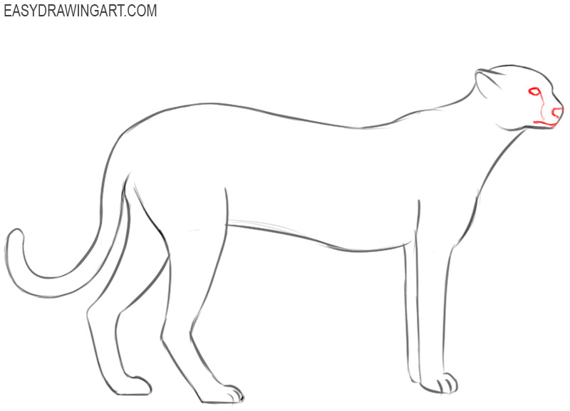 how to draw a cheetah step by step slowly how to draw a cheetah drawingforallnet step how draw step a by to slowly cheetah