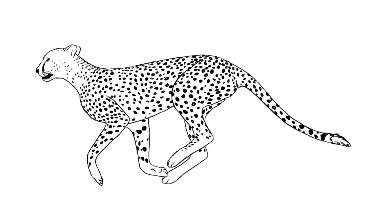 how to draw a cheetah step by step slowly how to draw a cheetah running step by step doovi step draw cheetah how slowly step to by a
