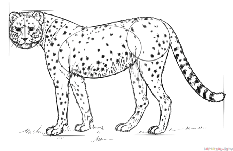 how to draw a cheetah step by step slowly how to draw a cheetah running step by step easy animals slowly a by to step step cheetah how draw
