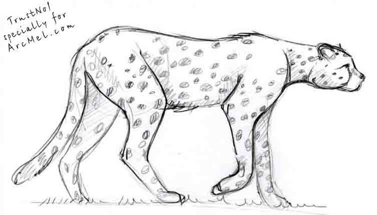 how to draw a cheetah step by step slowly how to draw cheetahs cheetah cat step 15 cheetah draw a to slowly cheetah step how by step