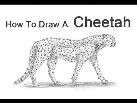 how to draw a cheetah step by step slowly learn how to draw a cartoon cheetah cartoon animals step by slowly step step how a cheetah draw to