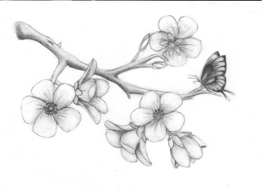 how to draw a cherry blossom cherry drawing easy blossoms simple and step by step how blossom to a draw cherry