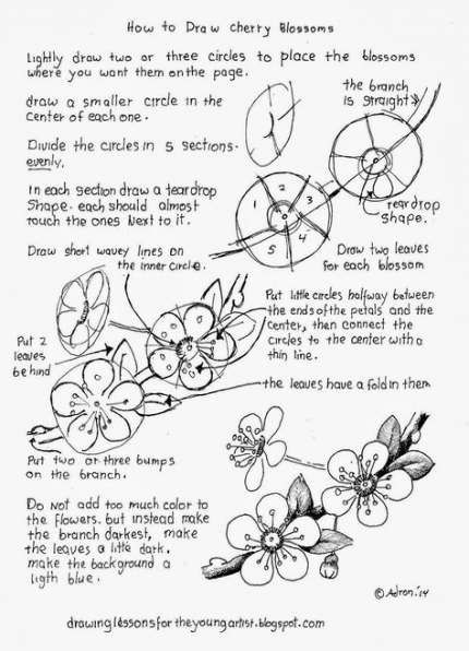 how to draw a cherry blossom create a japanese cherry blossom scene cherry blossom to cherry a blossom draw how