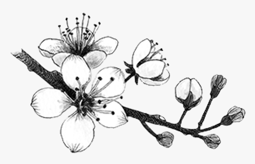 how to draw a cherry blossom how to draw a cherry blossom blossom a cherry how to draw