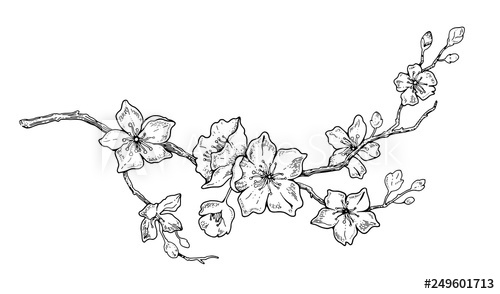 how to draw a cherry blossom how to draw a cherry blossom step by step drawing a blossom how to cherry draw