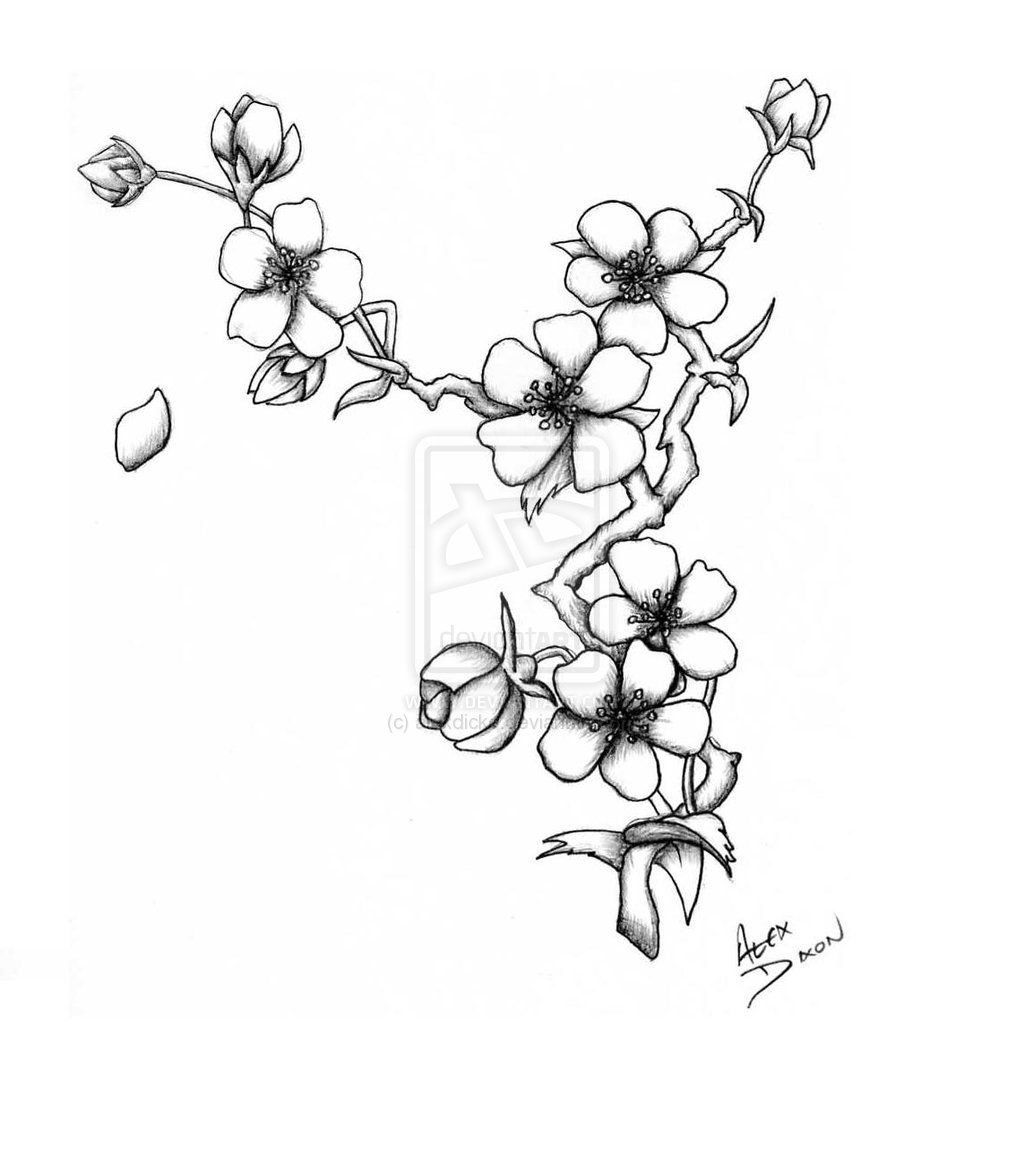 how to draw a cherry blossom tree blossom tree drawing at getdrawings free download blossom how a draw cherry tree to