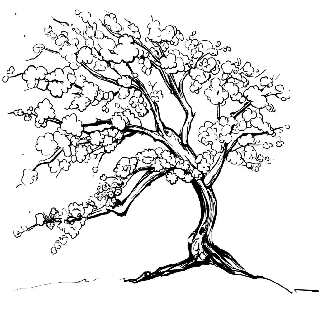 how to draw a cherry blossom tree cherry blossom branch drawing free download on clipartmag draw blossom a tree to cherry how