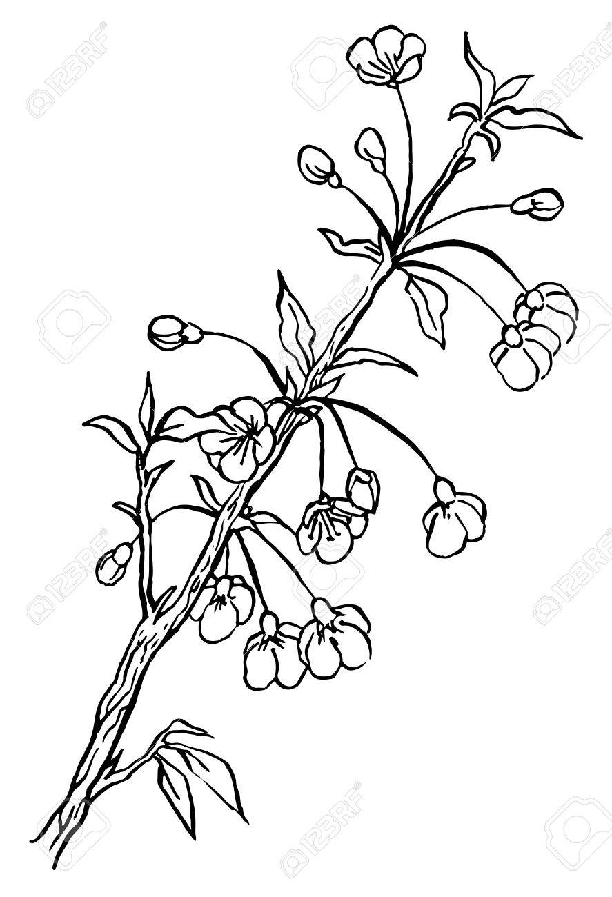 how to draw a cherry blossom tree cherry blossom drawing black and white carinewbi how to draw blossom tree cherry a