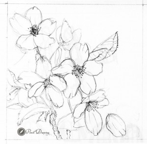how to draw a cherry blossom tree cherry blossom drawing outline at getdrawings free download blossom tree cherry a to how draw