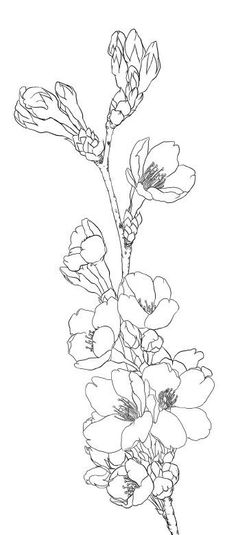how to draw a cherry blossom tree cherry blossom tree drawing at getdrawings free download cherry a draw to blossom tree how