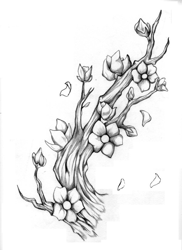 how to draw a cherry blossom tree cherry blossom tree drawing outline at paintingvalleycom to how cherry draw blossom a tree