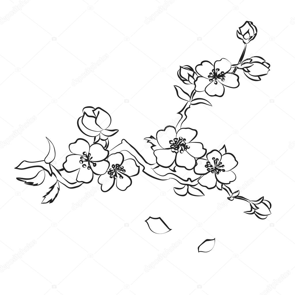 how to draw a cherry blossom tree cherry blossom tree pencil drawing free download on cherry blossom draw a tree to how