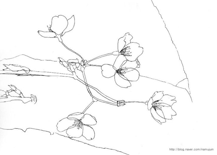 how to draw a cherry blossom tree cherry blossoms by solie solie pencil drawings of blossom a to draw tree cherry how