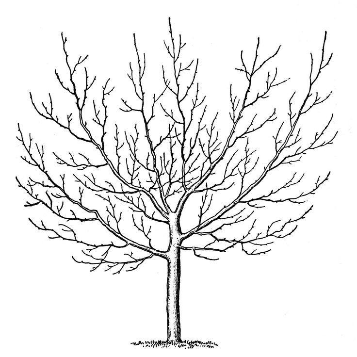 how to draw a cherry blossom tree how to draw a cherry blossom tree a to draw tree cherry blossom how