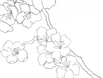 how to draw a cherry blossom tree how to draw how to draw a cherry tree hellokidscom how to cherry draw a blossom tree