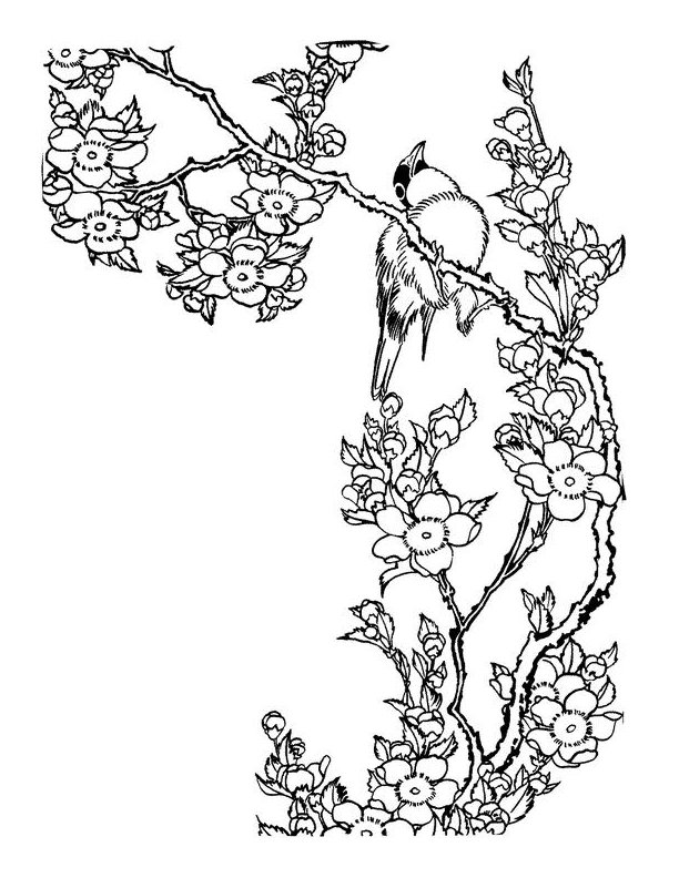 how to draw a cherry blossom tree newest for outline cherry blossom tree drawing the japingape draw how a cherry tree to blossom