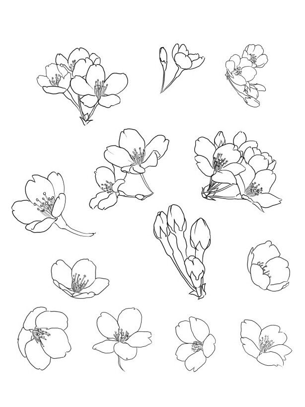how to draw a cherry blossom trendy drawing flowers tutorial cherry blossoms ideas blossom cherry draw to how a
