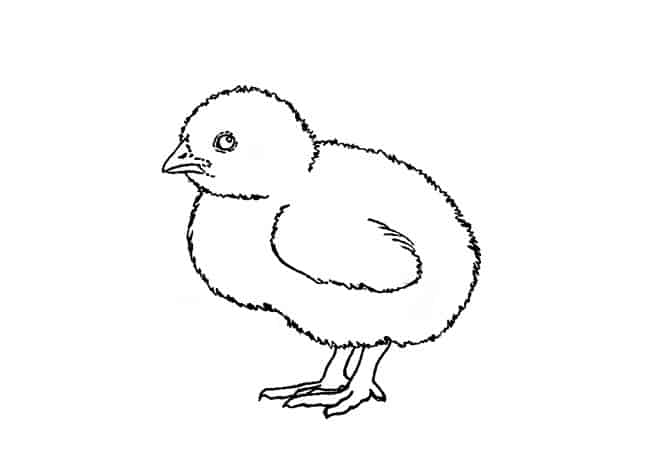 how to draw a chick how to draw a chick step by step easy animals 2 draw a chick how draw to
