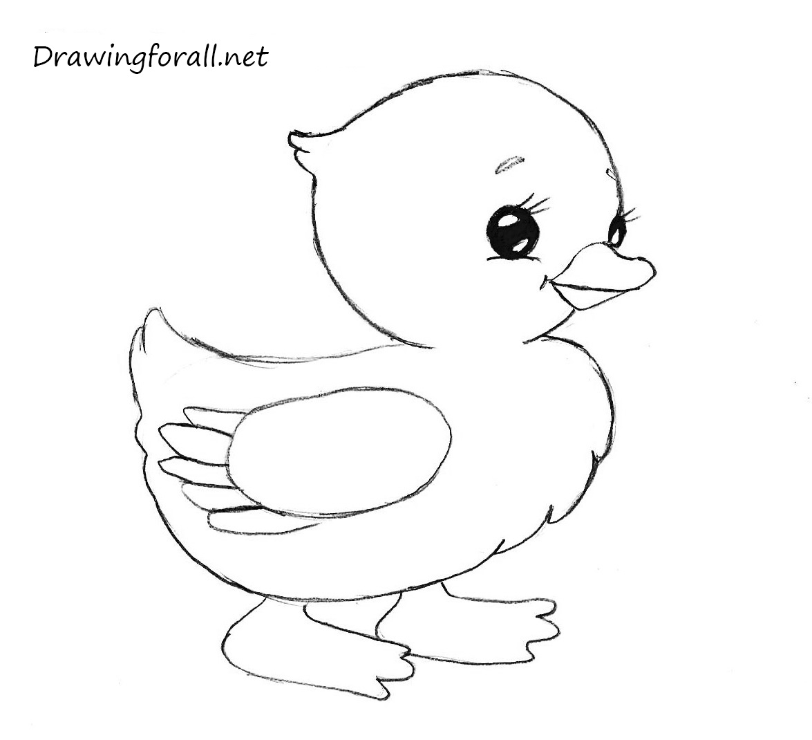 how to draw a chick how to draw a chicken drawingforallnet chick to a draw how