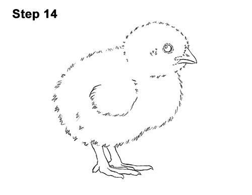 how to draw a chick how to draw chicks chicks step by step birds animals draw chick to how a