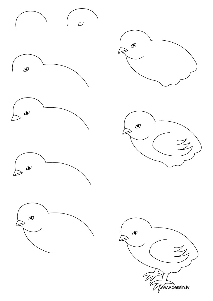 How to draw a chick