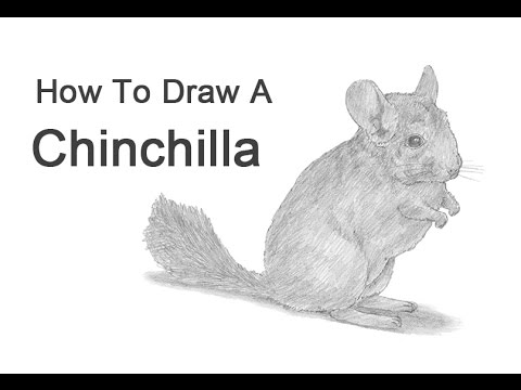 how to draw a chinchilla step by step 245 best chinchilla craft images in 2019 chinchilla by a draw how step chinchilla to step