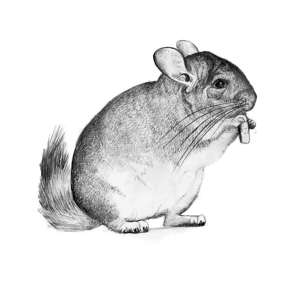 how to draw a chinchilla step by step how to draw a cartoon chinchilla step by step drawing by to step draw step how chinchilla a