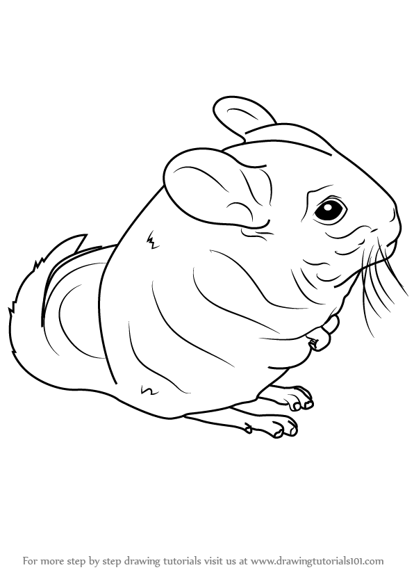 how to draw a chinchilla step by step how to draw a cartoon chinchilla step by step drawing draw how step a to by step chinchilla