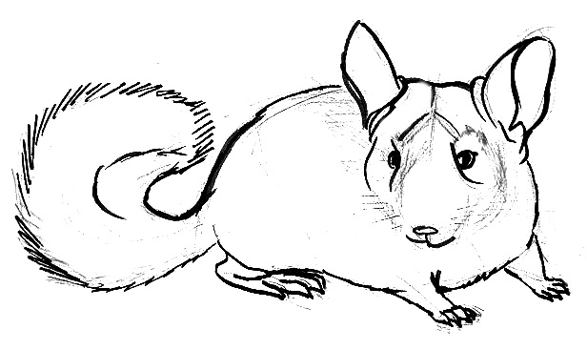 how to draw a chinchilla step by step how to draw a cartoon chinchilla step by step drawing how to draw a by step step chinchilla