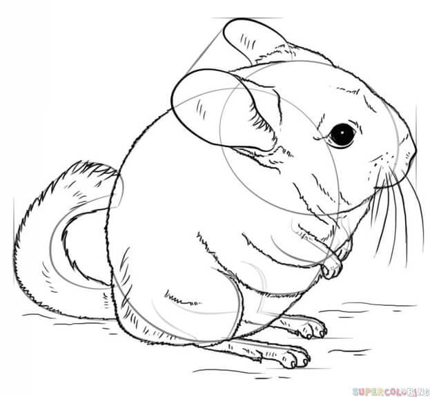 how to draw a chinchilla step by step how to draw a chinchilla step by step easy animals 2 draw chinchilla a to how step by draw step