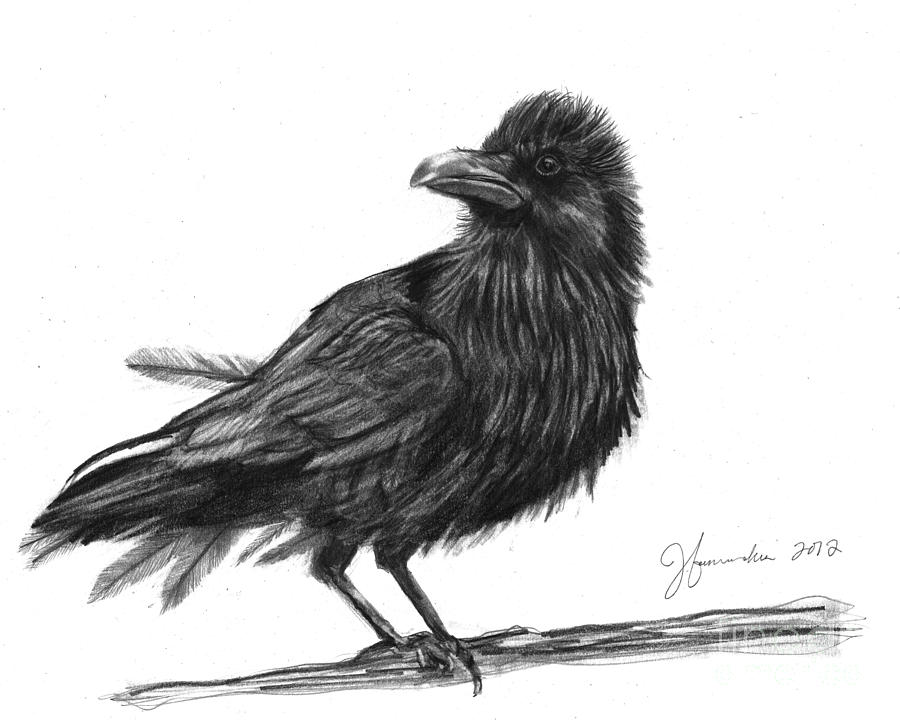 how to draw a crow how to draw a crow drawingforallnet a crow draw how to