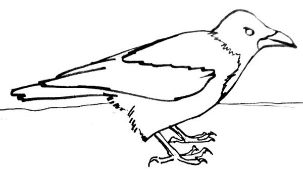 how to draw a crow how to draw a crow drawingforallnet draw crow how a to