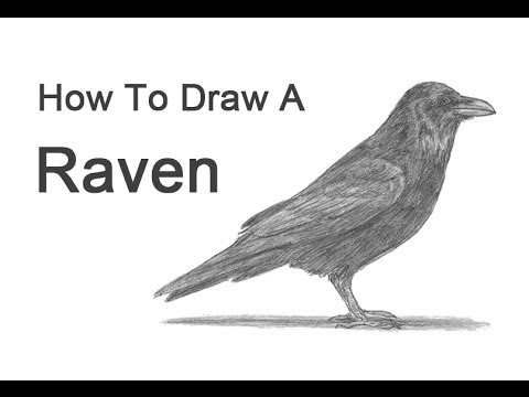 how to draw a crow how to draw a crow step by step drawing tutorials draw to how a crow
