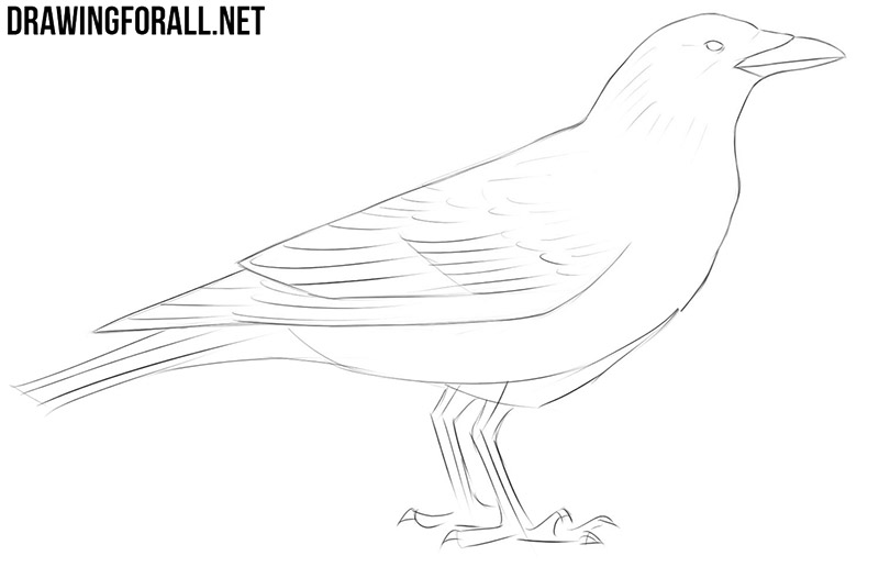 how to draw a crow how to draw a raven or crow youtube draw crow a to how