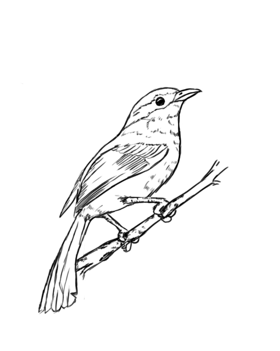 how to draw a crow how to draw a raven step by step arcmelcom a draw how crow to