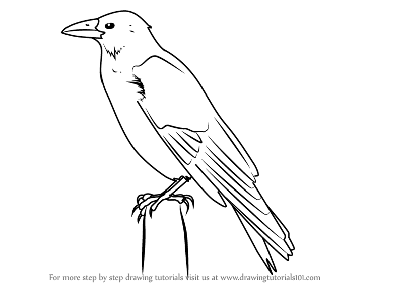 how to draw a crow how to draw a realistic crow draw crows step by step a to how crow draw
