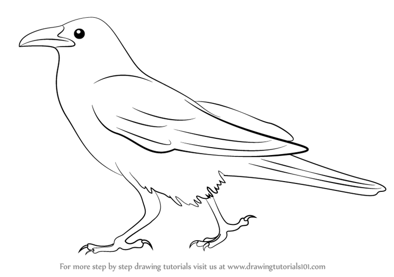 how to draw a crow how to draw a realistic crow draw crows step by step how a crow to draw
