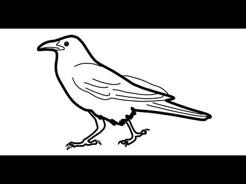 how to draw a crow how to draw a realistic crow draw crows step by step to draw a crow how