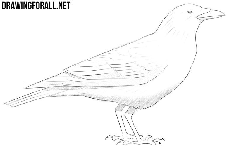 how to draw a crow how to draw a realistic crow draw crows step by step to how a crow draw
