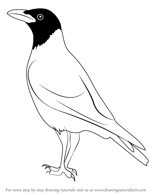 how to draw a crow learn how to draw a crow birds step by step drawing crow how draw to a