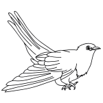 how to draw a cuckoo bird cuckoo drawing free download on clipartmag cuckoo how bird draw to a