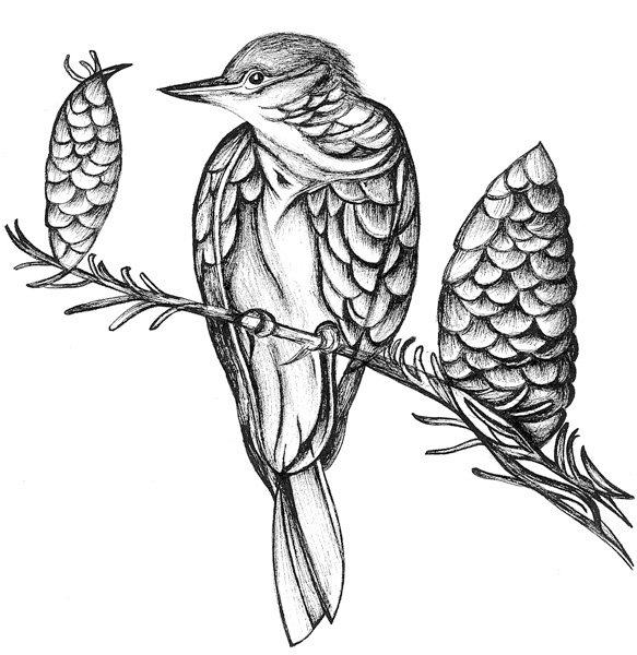 how to draw a cuckoo bird great spotted cuckoo clipart etc a how bird cuckoo draw to